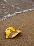 Geel droog blad op een zandig strand Stock Afbeeldingen