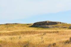 Geel droog gras op het gebied Stock Afbeelding