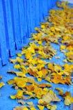Geel en blauw Royalty-vrije Stock Foto's
