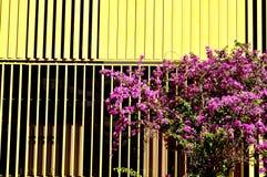 Geel en de boom Stock Afbeeldingen