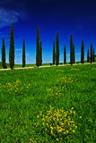 Geel en groen bloemgebied met duidelijke donkerblauwe hemel, Toscanië, Italië Gele weide met bloem Gele bloei met cipresboom Royalty-vrije Stock Foto