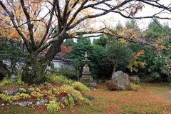 Geel en groen Japans Blad op de tak van boom met verfraaide steendekking door korstmosmos in de de herfsttuin stock afbeelding
