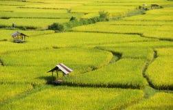Geel en groene padie, rood Royalty-vrije Stock Afbeeldingen