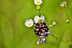 Geel en met zon wilde bloem Stock Foto