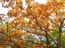 Geel en oranje dalingsgebladerte in het middagzonlicht Royalty-vrije Stock Fotografie