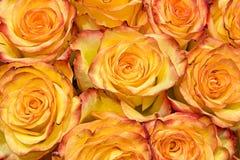 Geel en Oranje Rozenboeket Royalty-vrije Stock Afbeelding