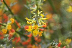 Geel en oranje Wildflowerdetail stock afbeeldingen