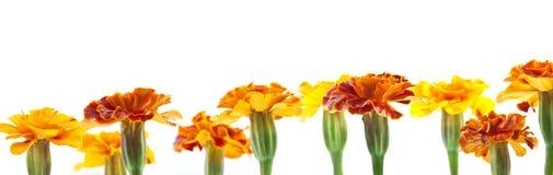 Geel en rode bloemen Stock Afbeelding