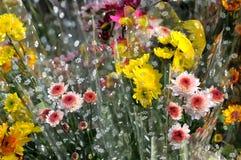 Geel en roze mumboeket Stock Afbeeldingen