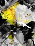 Geel en wit Stock Foto
