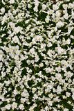Geel en wit bloemtapijt royalty-vrije stock foto