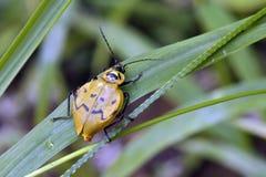 Geel en zwart insect op groene bladeren Stock Foto's