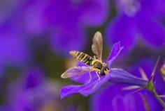 Geel en zwarte vlieg stock afbeeldingen