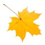 Geel esdoornblad als de herfstsymbool. Royalty-vrije Stock Afbeeldingen