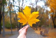 Geel esdoornblad in een hand op de radiale onduidelijk beeldachtergrond Royalty-vrije Stock Fotografie