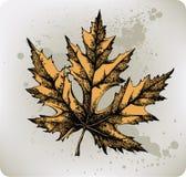 Geel esdoornblad, hand-trekt. Vector illustrati Stock Foto