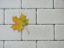 Geel esdoornblad op een baksteenbestrating, de herfstachtergrond Royalty-vrije Stock Foto