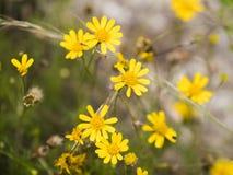 Geel flower power Royalty-vrije Stock Foto's