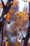 Geel fruit Royalty-vrije Stock Foto