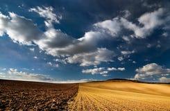 Geel gebied Stock Fotografie