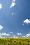 Geel gebied en blauwe hemel, de lente. Stock Foto