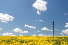 Geel gebied en blauwe hemel. De lente. Stock Fotografie