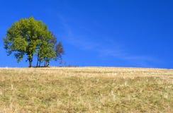 Geel gebied en eenzame boom. Stock Foto's