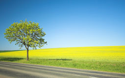 Geel gebied en eenzame boom stock afbeelding