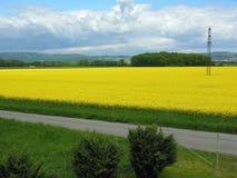 Geel gebied met bloeiende koolzaad en wolken royalty-vrije stock fotografie