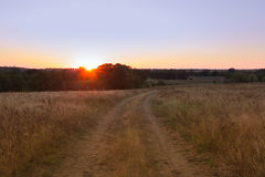 Geel gebied met een vertakt voetpad bij zonsondergang stock afbeeldingen