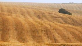 Geel gebied na het oogsten Gemaaid gebied Royalty-vrije Stock Fotografie