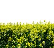 Geel Gebied van Bloemen stock afbeeldingen
