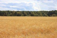 Geel gebiedslandschap Royalty-vrije Stock Afbeelding