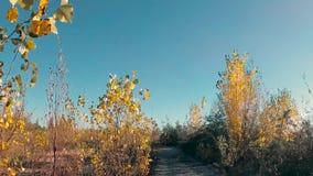 Geel gebladerte in de wind tegen een blauwe hemel stock videobeelden