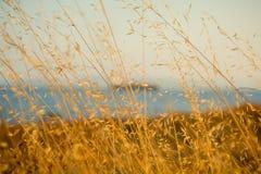 Geel gras Stock Foto's