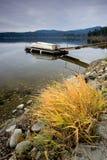 Geel gras op de kust en een dok. royalty-vrije stock afbeelding