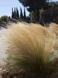 Geel gras zoals installatie Stock Afbeelding