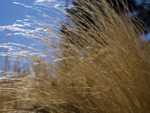 Geel gras zoals installatie Royalty-vrije Stock Afbeeldingen