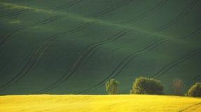 Geel koolzaad en groen gras in de lente Royalty-vrije Stock Foto's