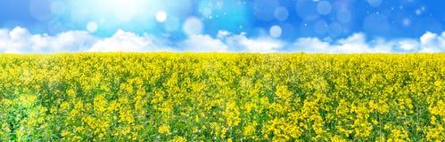 Geel koolzaadgebied onder de blauwe hemel met zon Royalty-vrije Stock Foto