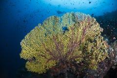 Geel koraal op het overzeese leven met blauwe achtergrond stock afbeeldingen