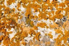 Geel korstmos op steenachtergrond stock afbeeldingen