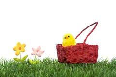 Geel kuiken binnen Pasen mand stock afbeelding