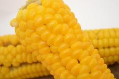 Geel maïskolf vegetarisch voedsel Royalty-vrije Stock Foto's