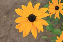 Geel madeliefje die en in de warme zon rusten zonnebaden geel madeliefje op een lichtgroene geïsoleerde achtergrond royalty-vrije stock afbeeldingen