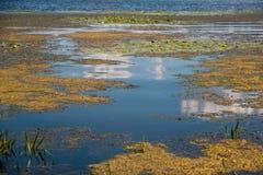Geel moeras onder bewolkte hemel Royalty-vrije Stock Afbeelding