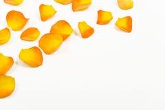 geel nam bloemblaadjes toe stock afbeeldingen