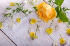 Geel nam op witte houten achtergrond toe David Austin Rose Golden Celebration Stock Foto's