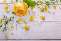 Geel nam op witte houten achtergrond toe David Austin Rose Golden Celebration Stock Afbeeldingen