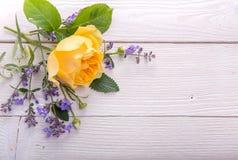 Geel nam op witte houten achtergrond toe David Austin Rose Golden Celebration Royalty-vrije Stock Afbeelding
